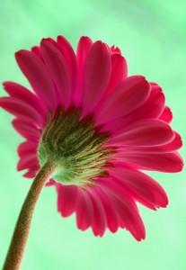 Daca as fi o floare...