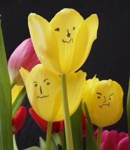 Floricica cea rea
